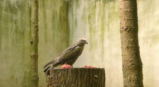 oiseauax