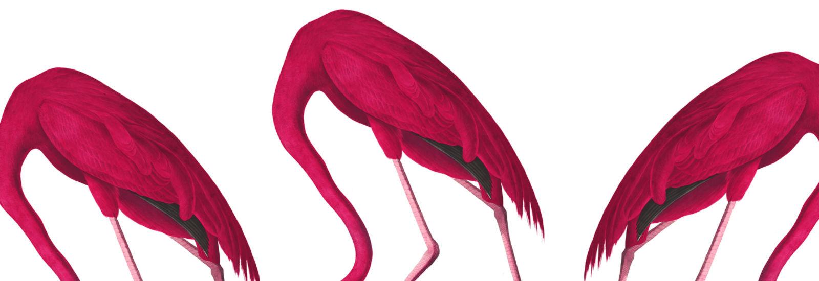 flamingofarm_72_0